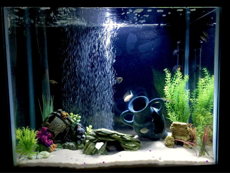 Cara Membuat Aquarium Mini